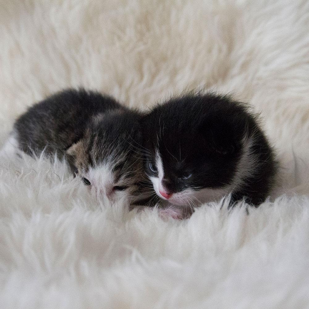 Süsse Katzenbabies Mickey & Daisy (und Mama Lilly)