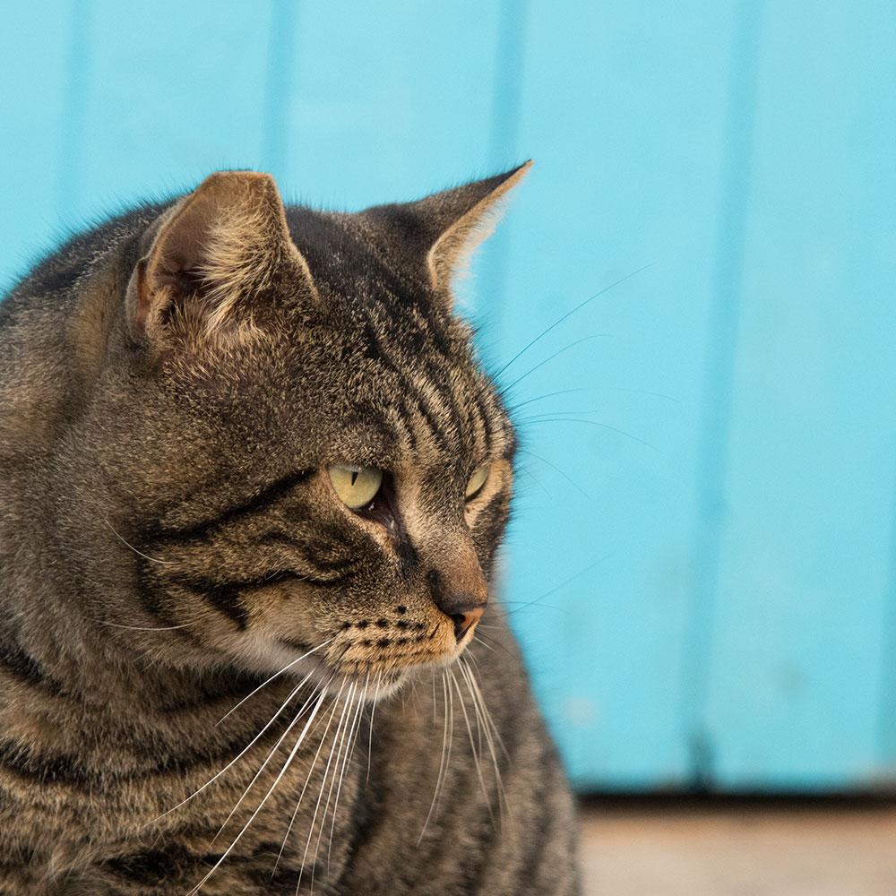Die Hafenkatzen von Meta (Sorrento, Italien)